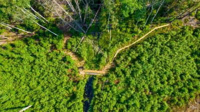 Bild tagen i höjden av spång i naturen.
