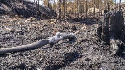 Brandslag i förkolnat landskap.