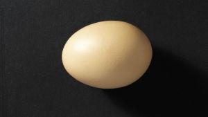 Ägg mot svart bakgrund.