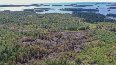 Drönarvy över skogsbrandsområde.