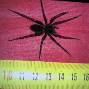 Vad är det här för en stor spindel som Britta hittade i båten?
