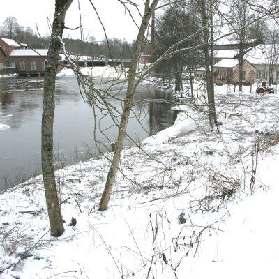 Ett gallrat trädbestånd vid en å.