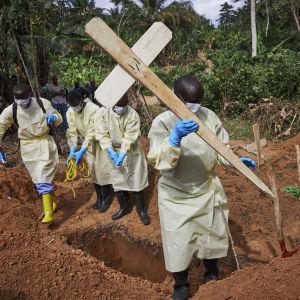 Hjälparbetare som gräver gravar för ebolaoffer.