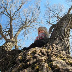 Lapsi istuu vanhan puun rungolla