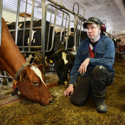Håkan Back, mjölkproducent i Rimal i Korsholm.