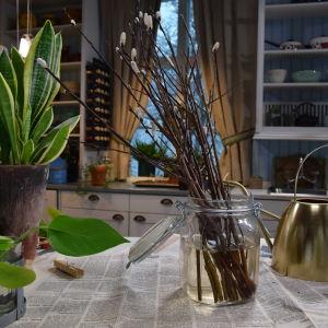 En köksbänk täckt med tidningspapper där det bland annat står en svärmorstunga, en vattenkanna och en glasburk med ett fång videkvistar.
