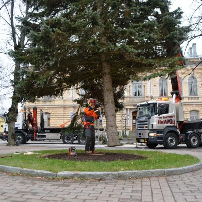 Julgranen anländer till Borgå torg.