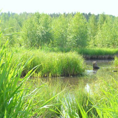 Vatten där våtmarken kommer att byggas i Snappertuna.