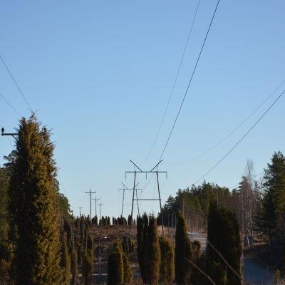 ellinjer och -stolpar i skogslandskap
