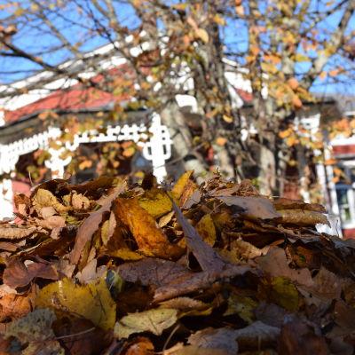 Lövhög framför Strömsövillan på hösten.