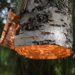 Lampa av björk