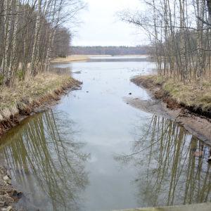 En bäck med lågt vatten.