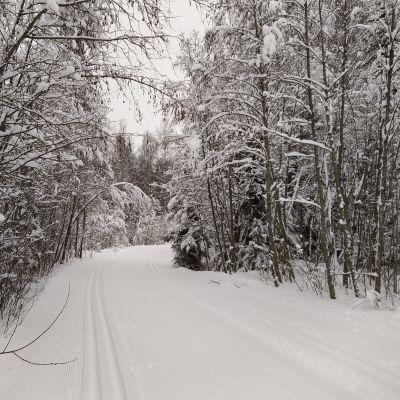 Latu Kuopion Saaristokaupungissa lumisten puiden keskellä