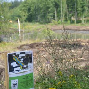 En blivande våtmark. Vattenfylld åkermark. En skylt med Världsnaturfondens logo, den svart-vita pandan, syns i förgrunden.