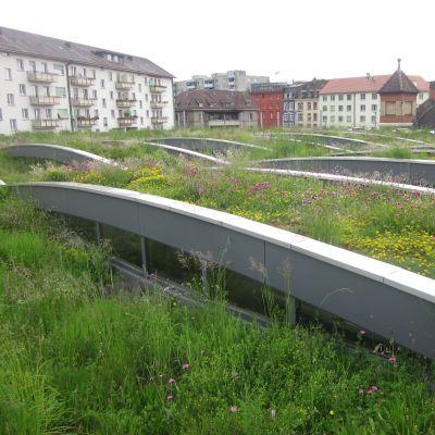 Viherkatto Baselissa Sveitsissä.