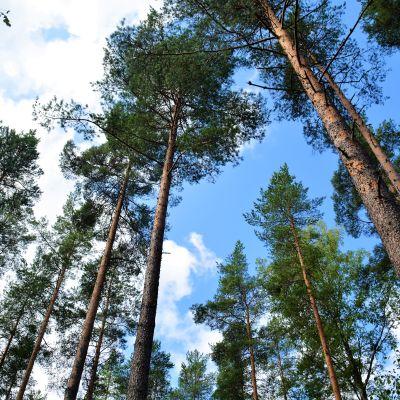 Skog på Olsböle gård.