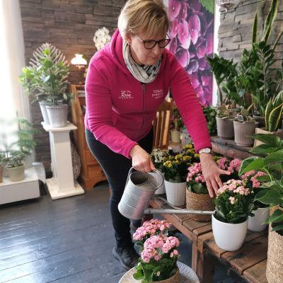 Kukkakauppias kaataa  vettä kukille.