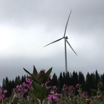 Tuulivoimala ja kukkia