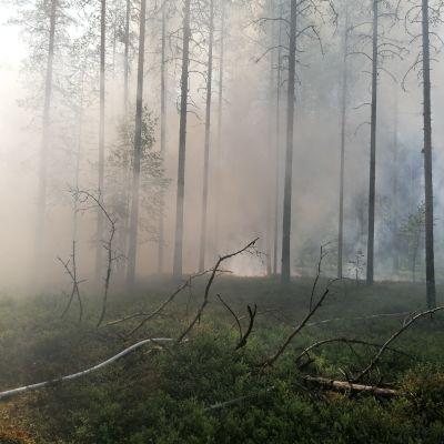 Metsässä savua, metsä palaa.