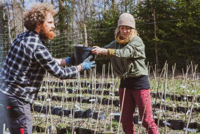 Diederik Saeijs ja Ulla-Maija Takkunen talkoilevat Vaunumäen yhteisössä Diederikin taimitarhassa.