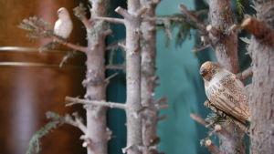 stammar och fåglar