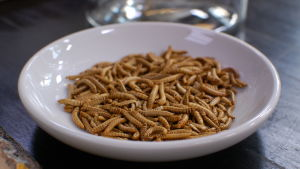 larver på ett fat