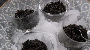 Belugakaviar på linser