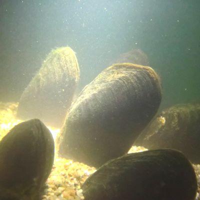 Raakkuja altaassa Konnevedellä