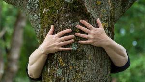 En persons händer omfamnar ett träd