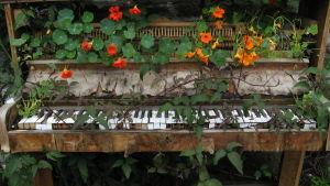 kukat ovat ottaneet vanhan pianon haltuun