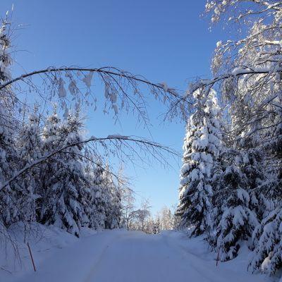 Luminen mökkitie talvisena, kauniina pakkaspäivänä.