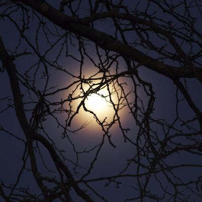 Kuu pimeässä