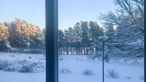 Vy från ett fönster. Vinterlandskap i blå toner och sol i trädtoppar.