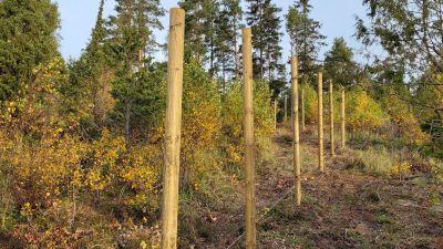 Ett staket som kantar ett område med växtlighet.