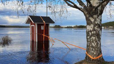 En liten bod, röd med vita knutar, står fastknuten vid ett träd vid strand med högt vatten.