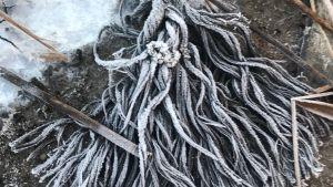 ett gammalt fruset rep.