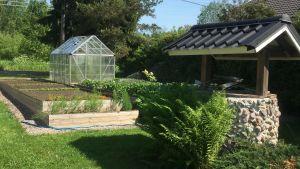 Kesäinen omakotitalon pihamaa kaivoineen ja huolellisesti hoidettuine kasvimaineen ja -huoneineen.