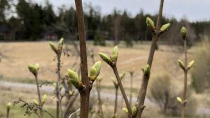 Trädgården vaknar till liv på våren.