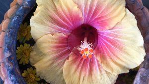 stor exotisk blomma