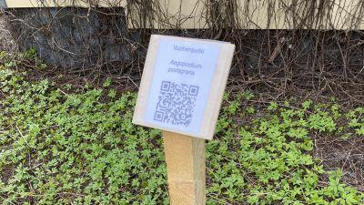 Vuohenputkesta kertova QR-koodi