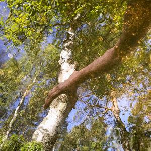 En hand som speglas i en sjö och tycks greppa tag i en björk som även den speglas i vattenytan.