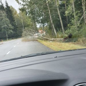 Omkullblåst träd i Gerby i Vasa.