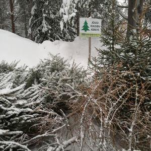Joulukuusen keräyspaikka Rovaniemellä