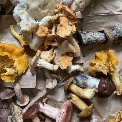 Blandade matsvampar på ett bord.