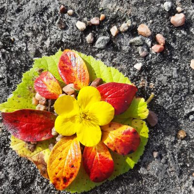 En blomma och höstlöv som formats till konstverk.