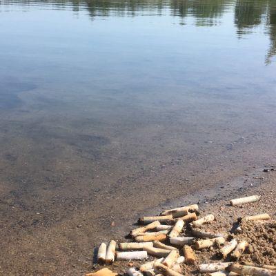Tupakantumppeja rannalla veden tuntumassa.