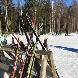 Hiihtosuksia telineessä, taustalla nainen hiihtää ladulla. Helmikuinen talvi maisema ja aurinko paistaa.