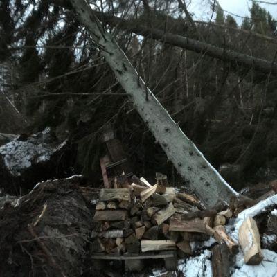 Ett träd ligger över en vedrad.
