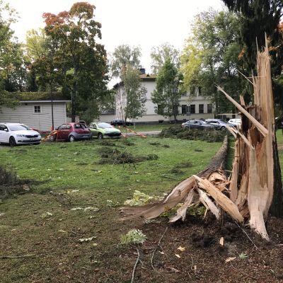 Myrsky kaatoi puun Nokialla