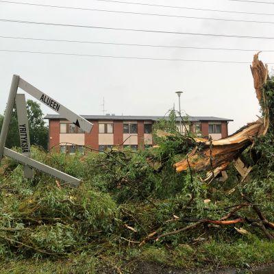 Kaatunut puu Salossa